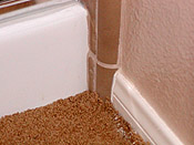 In San Diego mold can grow inside walls and under floors long before it is visible.