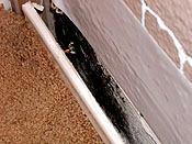 Stachybotrys is the mold most often referred to as black mold or toxic mold and often present whenever construction materials get wet, especially drywall.